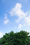 White cloud in the blue sky and tree Stock Photography