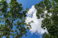 White cloud in the blue sky. View from bottom up Royalty Free Stock Image