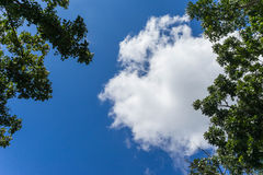 White cloud in the blue sky. View from bottom up Stock Images