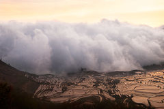 White cloud of mist entering and covering a rice field landscape in a valley between mountains at sunset. White cloud of mist entering and covering a rice field Royalty Free Stock Image