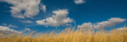 White clouds against the blue sky and dry grass to a feather grass. Web banner stock photo