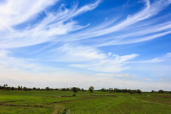 White clouds. On blue sky Royalty Free Stock Image