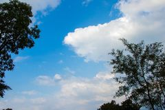 White clouds and blue sky. View through trees stock photo