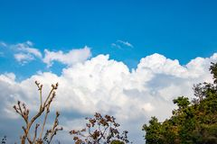 White clouds and blue sky. View through trees stock image