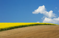White clouds floated above the yellow rapeseed field Royalty Free Stock Photo