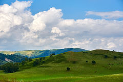 The white clouds and green meadow Royalty Free Stock Photo