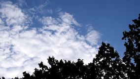 White clouds move above tops of green trees stock footage
