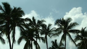 White Clouds Moving In Blue Sky Behind Green Palm Trees stock video