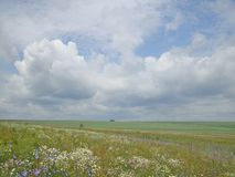 White clouds over the meadow Royalty Free Stock Images
