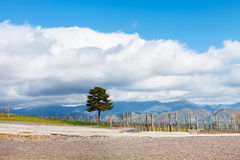 White clouds over vineyard in Etna region Stock Photos