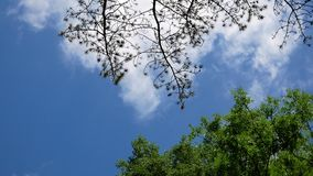 White clouds quickly move through the blue sky above the green trees stock video footage