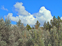 White Clouds and Silver Sage. Clouds and sagebrush in the Crooked River National Grassland - near Terrebonne, OR royalty free stock image