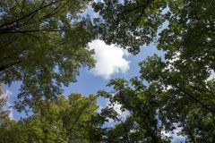 White clouds surrounded by luxuriant trees Royalty Free Stock Image