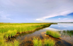 White clouds and wetland Royalty Free Stock Photos