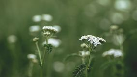 White Clustered Flower on Selective Focus Photography Royalty Free Stock Images