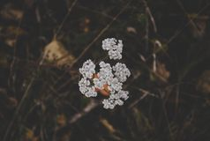White Clustered Flowers Royalty Free Stock Photos
