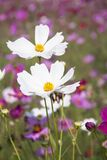 White Clustered Petal Flower Royalty Free Stock Photo