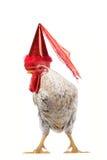 White cock. On a white background Stock Photo