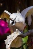 White Cockatoo Stock Photo