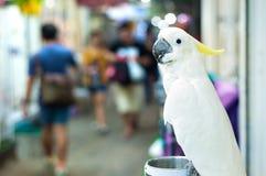 White cockatoo perching at Chatuchak Market, Bangkok, Thailand Royalty Free Stock Images
