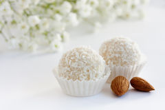 White coconut truffles. White sweet coconut truffle, close up Stock Photography