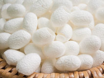White cocoon. Royalty Free Stock Images