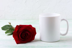 White coffee mug mockup with dark red rose Stock Photos