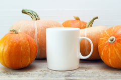 White coffee mug with small pumpkins on a wooden table. Stock Images