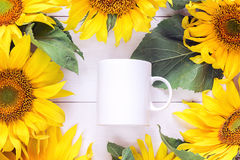 White coffee mug is surrounded by yellow sunflowers. Place for t Royalty Free Stock Image