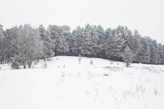 White and cold wood. Many snow at winter 2019 royalty free stock photos