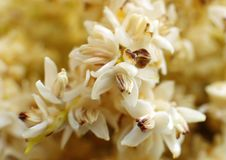 White color male dates flowers Royalty Free Stock Images