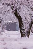 The white color of nature. The branches are snowy, it was after a winter storm. Frost, landscape, beautiful, outdoor, park, america, day, trees, wood, urban royalty free stock image