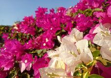 White Color Petals in Garden royalty free stock photos