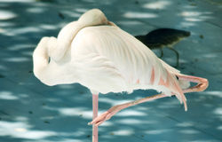 White color swan or heron bird Stock Image