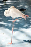 White color swan or heron bird Stock Photography