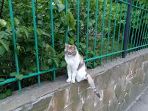 White colored domestic cat sitting on the fence of cement Stock Photo