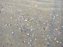 White and Colorful Sea Shells on Beach with Grey Sand Royalty Free Stock Photo