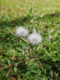 White colour flower. Unknowen white colour flower on the grassland stock images