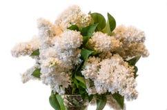 White common lilac (syringa) in vase isolated on white backgroun Royalty Free Stock Photos