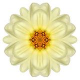 White Concentric Daisy Mandala Flower Isolated on Plain Stock Photo