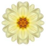 White Concentric Daisy Mandala Flower Isolated on Plain Stock Photo