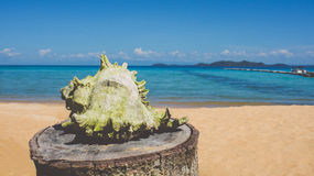 White conch on the beach royalty free stock photography