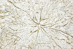 White Concrete  Decorative Stone like as Tree Cross Section Stock Photos