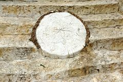 White Concrete  Decorative Stone like as Tree Cross Section Royalty Free Stock Image