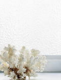 White coral on a background of ice-covered  window Stock Photo