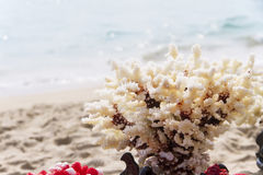 White coral Royalty Free Stock Photography