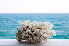 White coral, beautiful closeup on the sea background royalty free stock photography