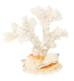 White coral close up Royalty Free Stock Image