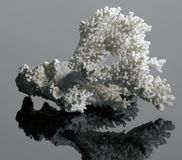 White coral Stock Images