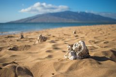 White coral on the sand at the beach in Maui Stock Photos